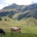 Ausblick von der Alp auf den Hausberg